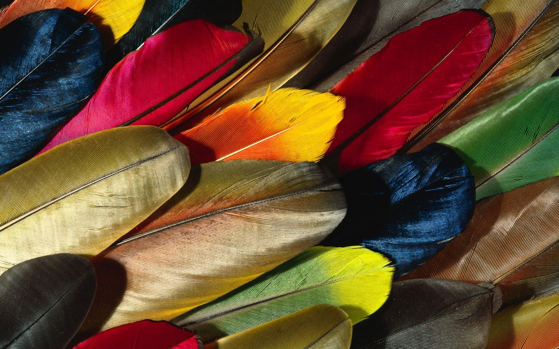 Multicolor design feathers wallpaper