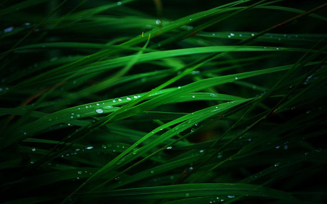 Grass water drops wallpaper