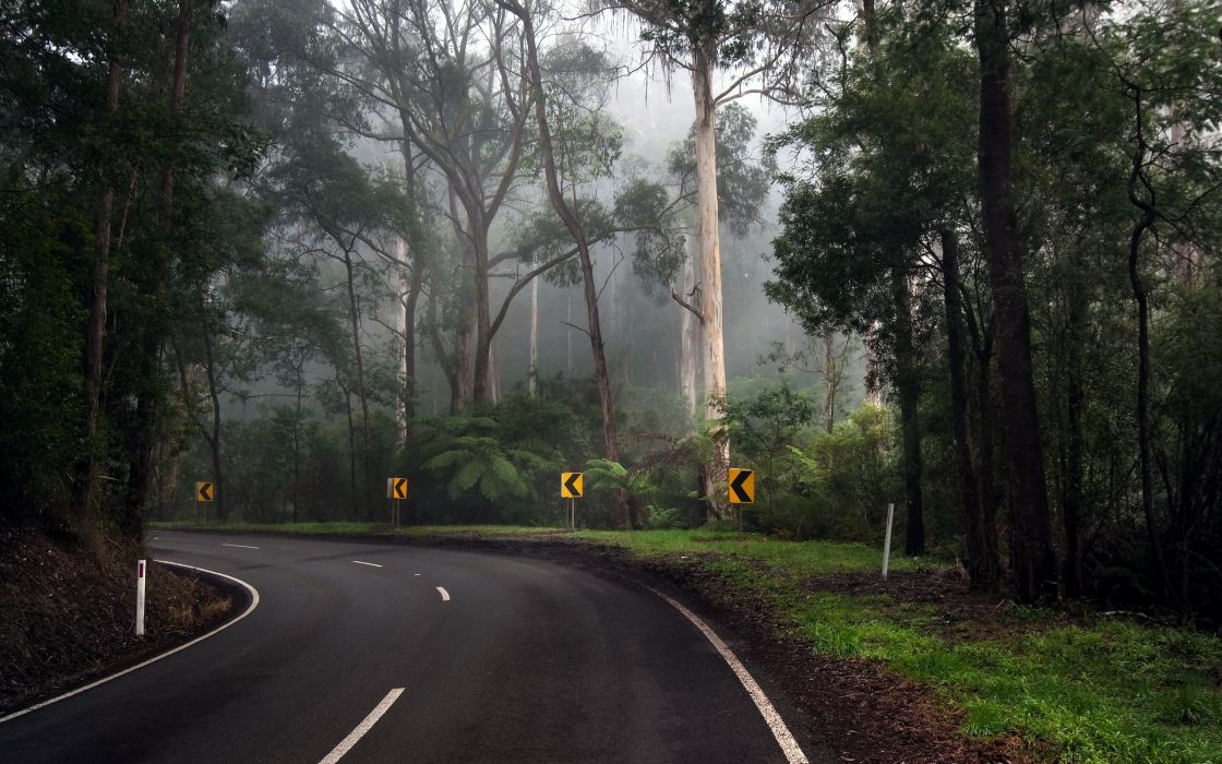 Trees streets forest turn roads wallpaper