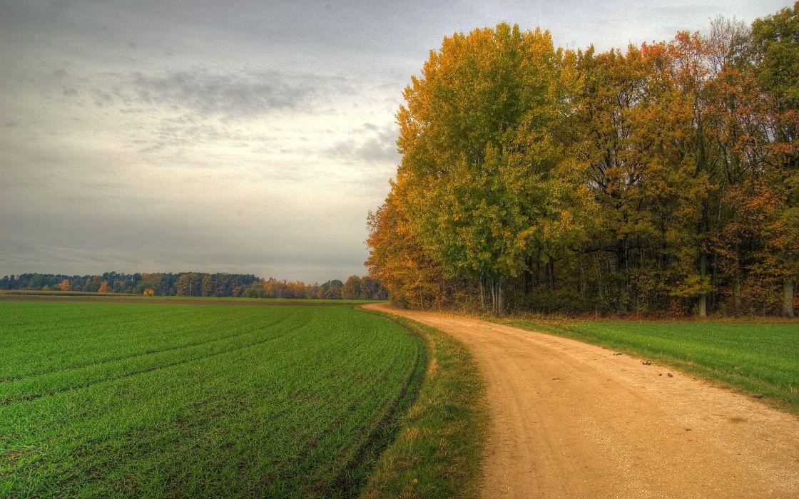 Landscapes trees fields wallpaper