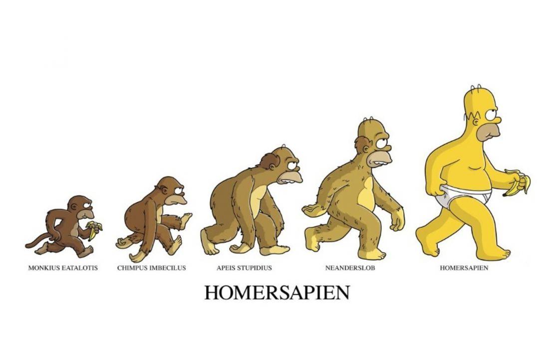 Homer simpson evolution the simpsons white background wallpaper