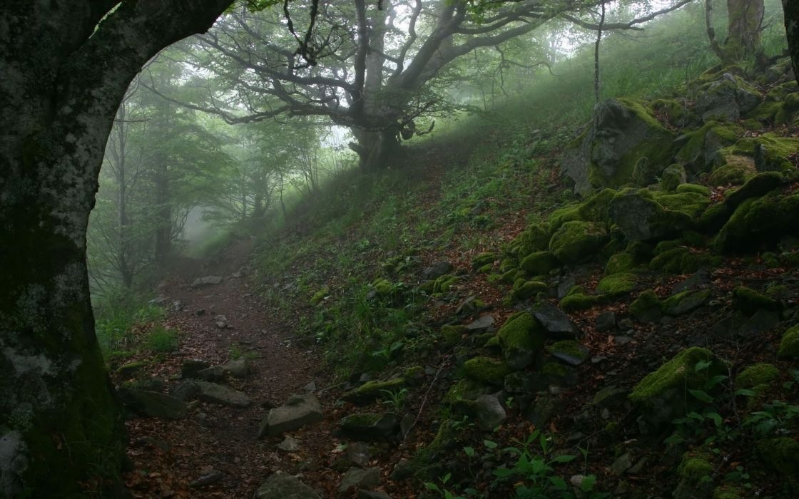 Nature trees forest path rocks fog moss wallpaper