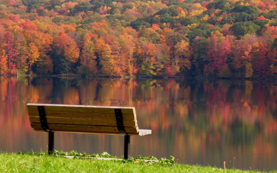 Landscapes nature trees bench wallpaper