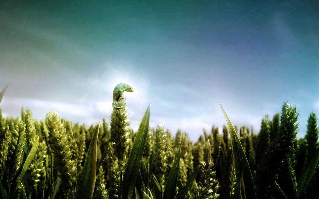 Chameleons fields skyscapes wallpaper