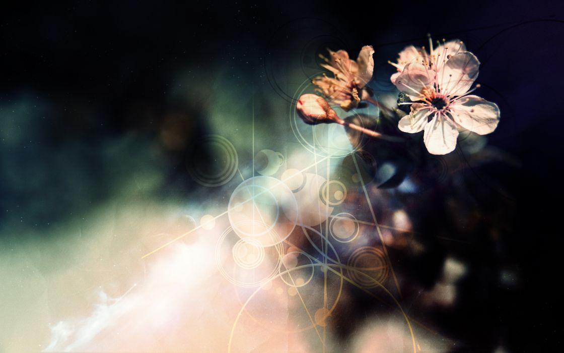 Flowers photomanipulations wallpaper