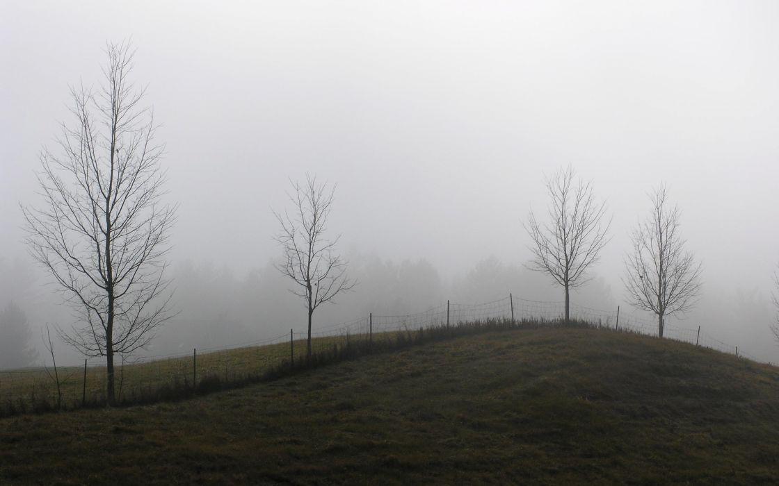 Landscapes trees fences cold fields brazil wallpaper