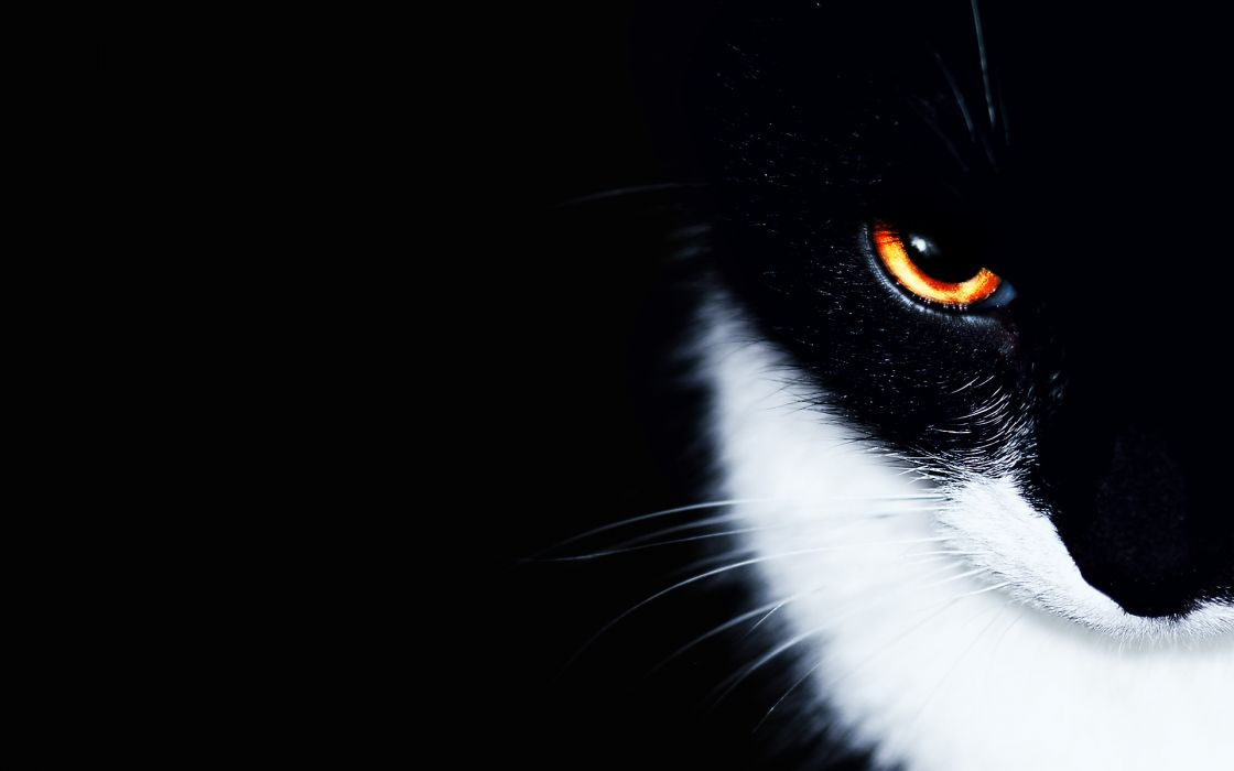 Cats animals orange eyes wallpaper