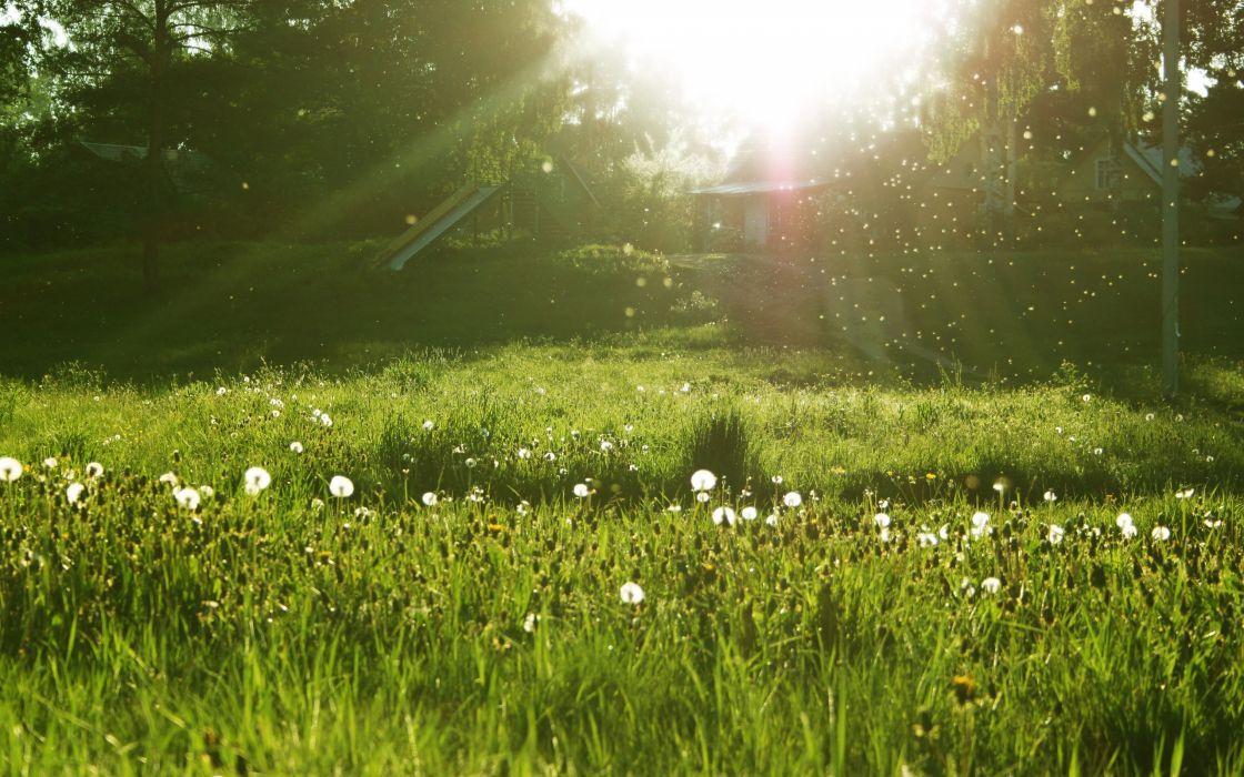 Nature grass sunlight dandelions wallpaper