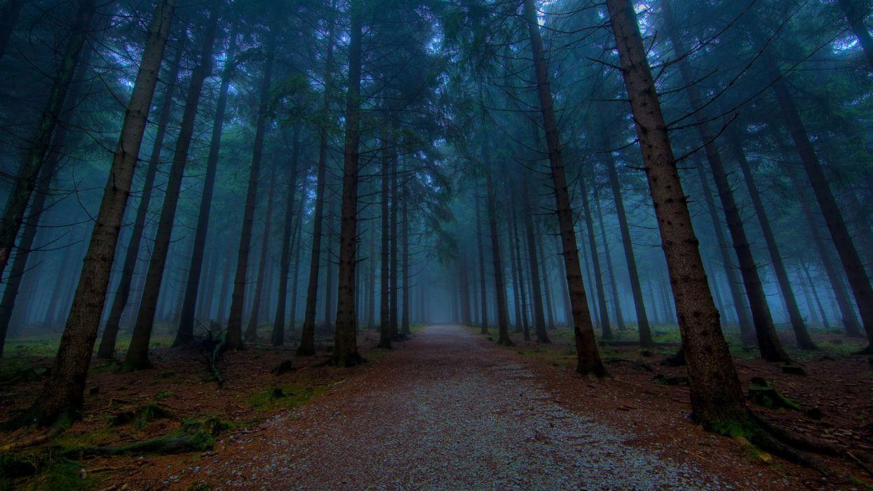 Landscapes nature forest fog wallpaper
