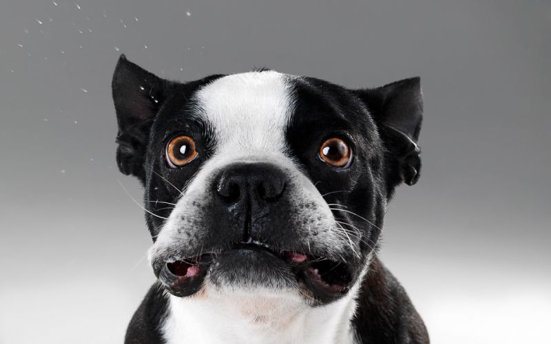 Animals dogs funny mammals wallpaper
