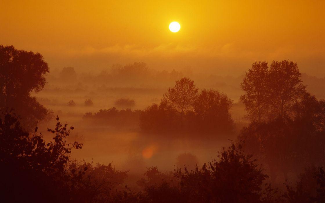 Landscapes sun trees fog mist poland sunlight wallpaper