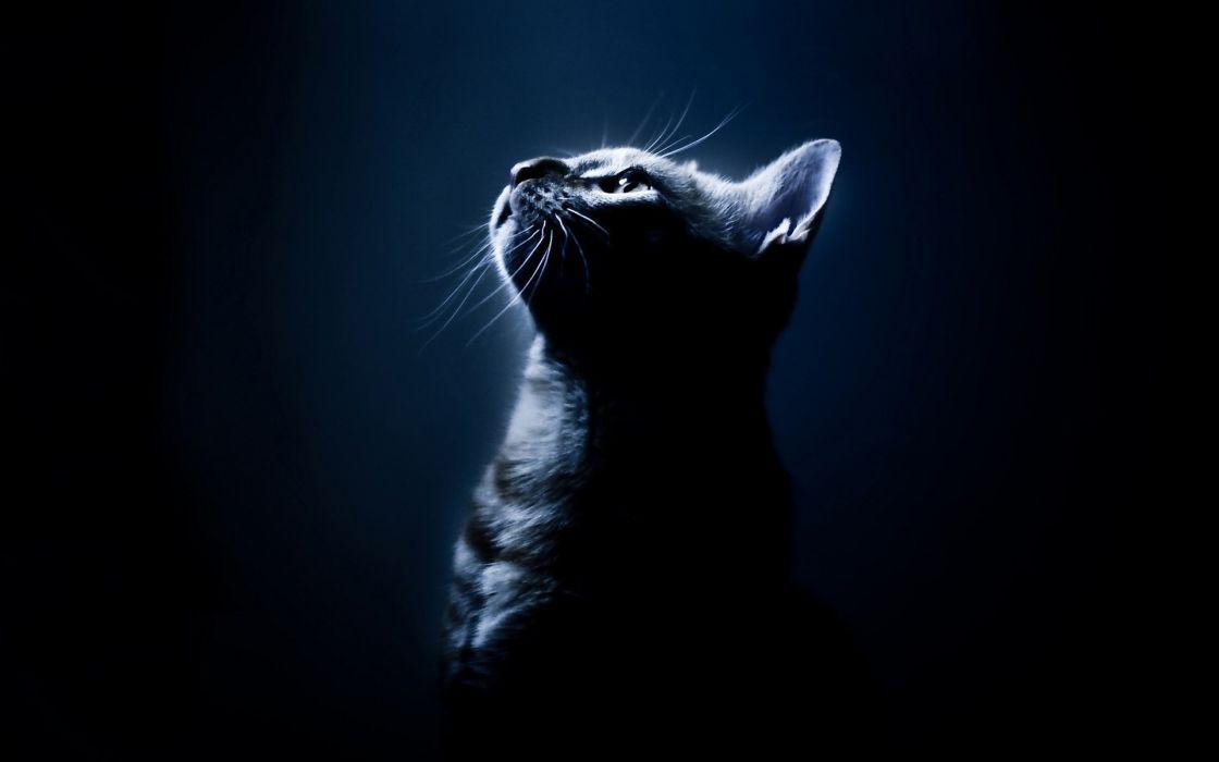Dark cats wallpaper
