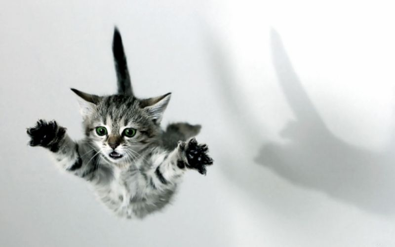 Cats animals jumping kittens wallpaper