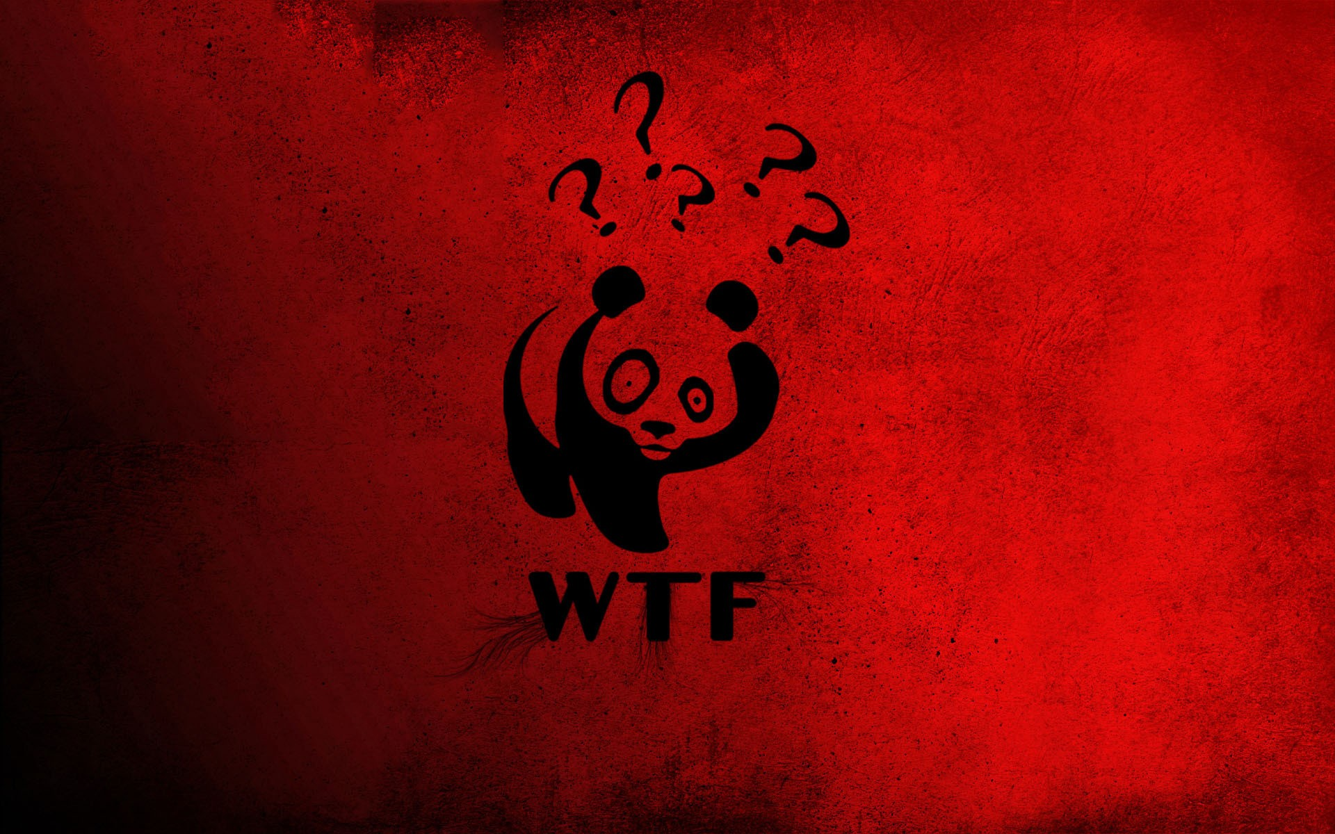 Wtf Panda Bears Wallpaper 1920x1200 14877 Wallpaperup