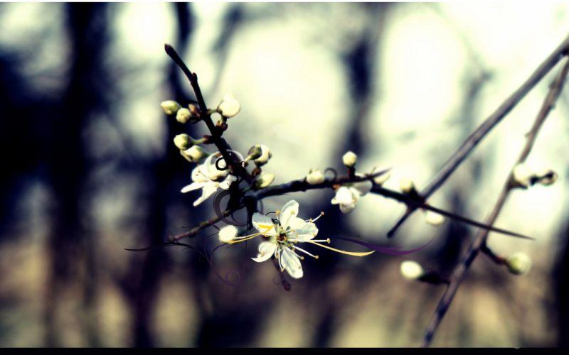 Trees flowers spring wallpaper