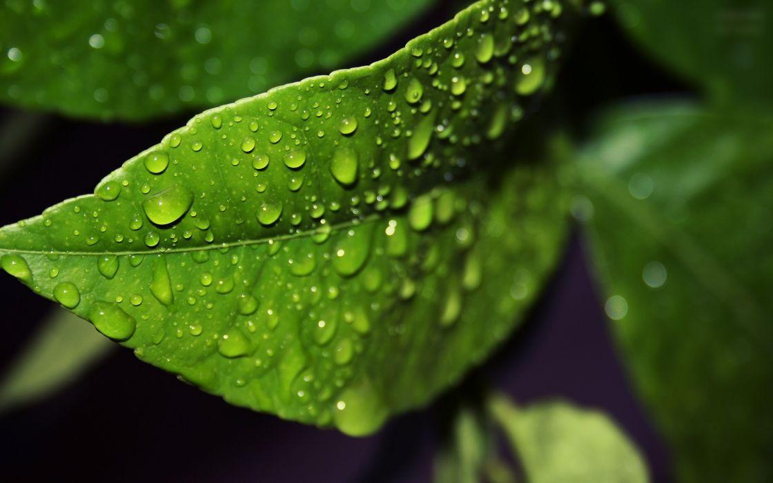 Green nature leaves water drops macro wallpaper