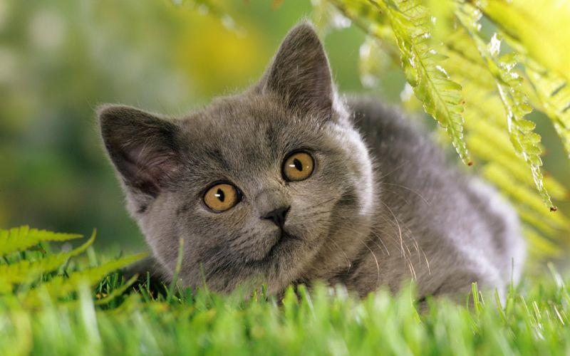 Cats animals tanks wallpaper