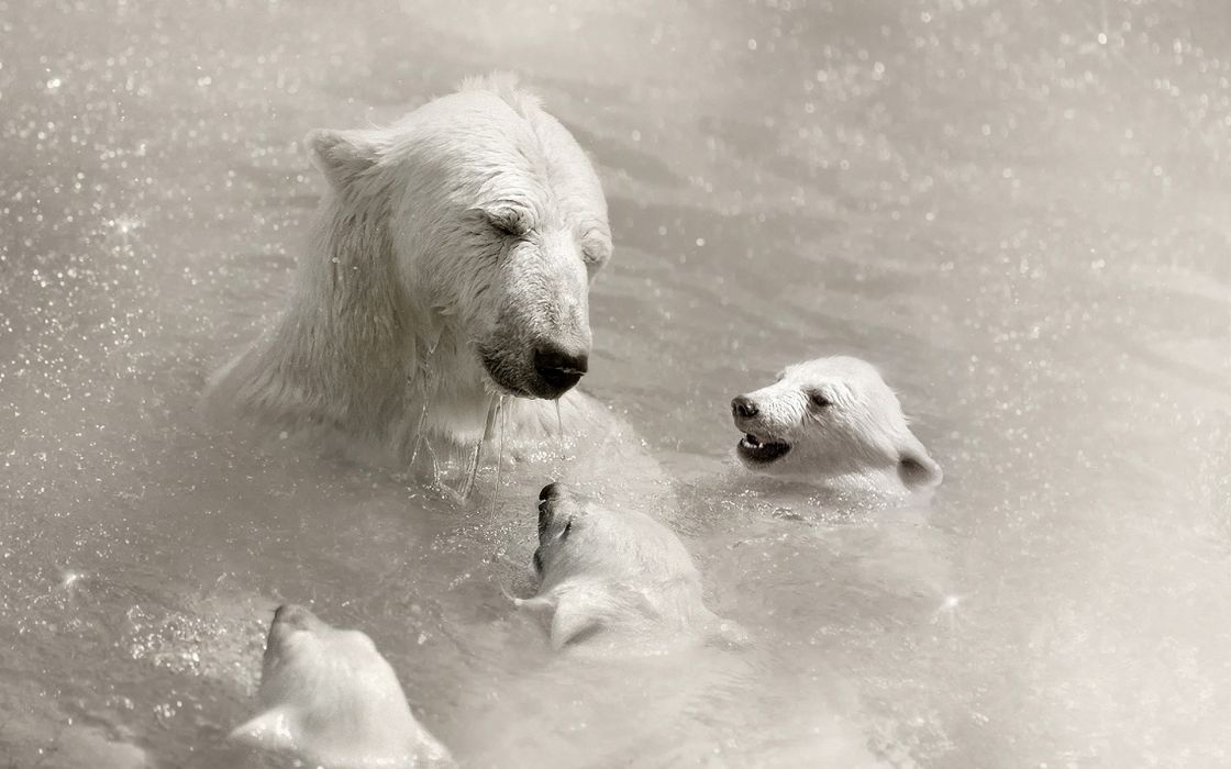 Animals polar bears baby animals wallpaper