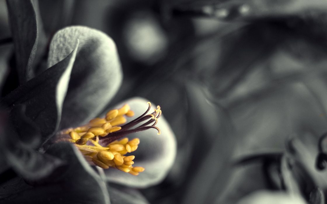 Flowers selective coloring wallpaper