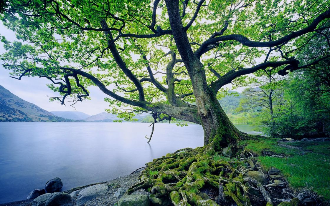 Landscapes nature trees old united kingdom lakes wallpaper
