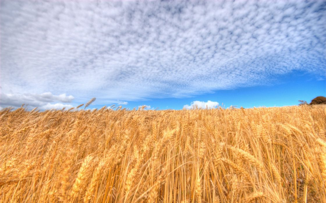 Clouds fields wheat wallpaper