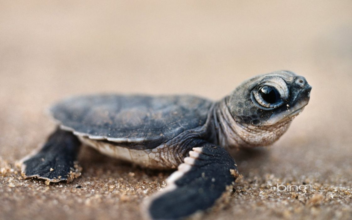 Sand animals turtles wallpaper