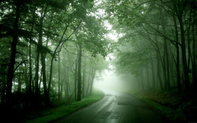 Nature forest mist roads wallpaper