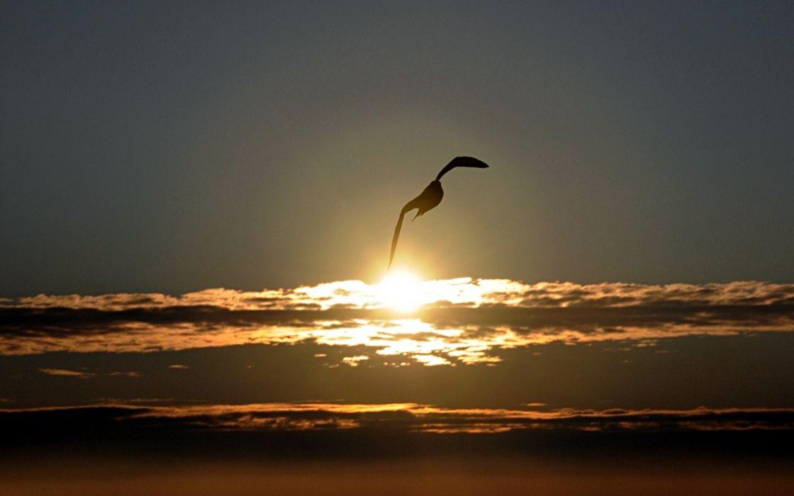 Birds wind spirit seagulls skyscapes wallpaper