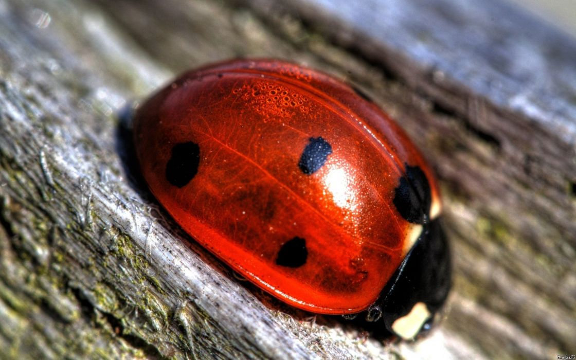 Up insects beetles macro ladybirds wallpaper