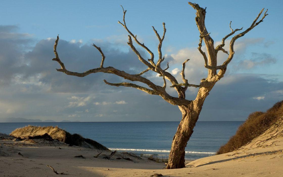Beach trees seas oceans wallpaper