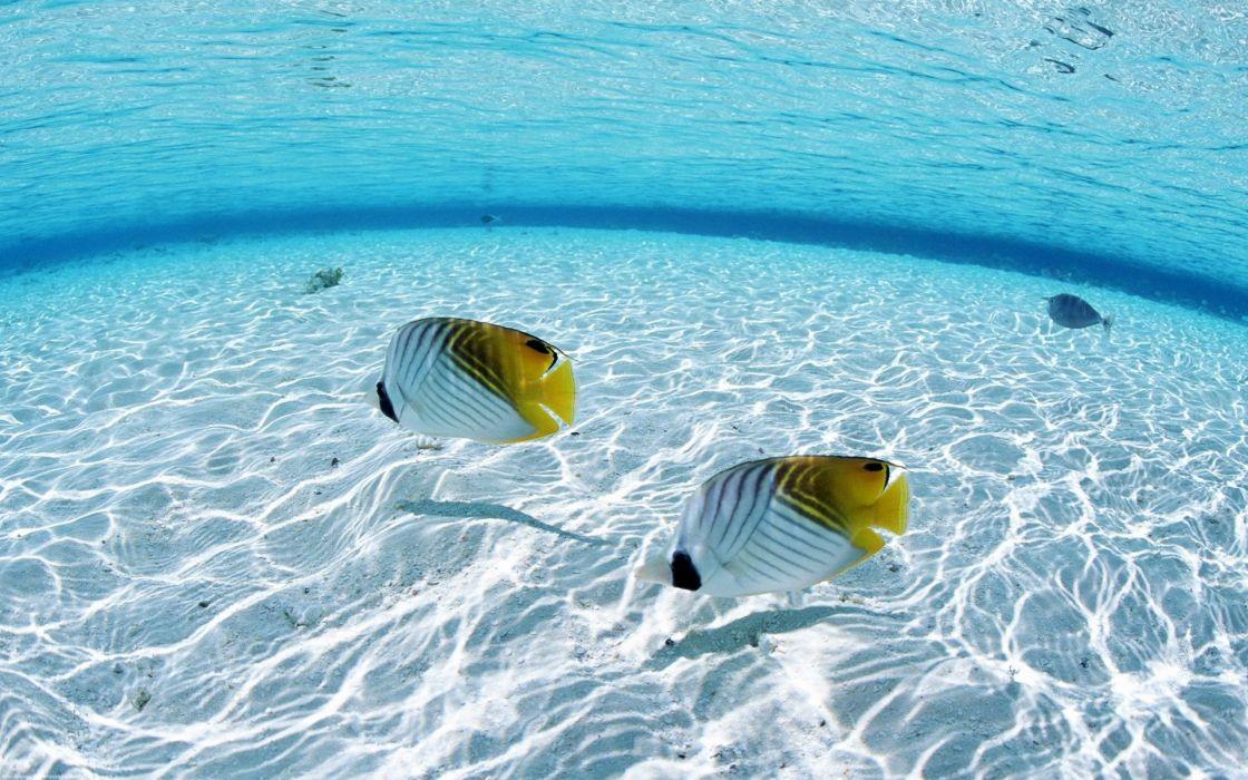 Ocean fish seascapes wallpaper