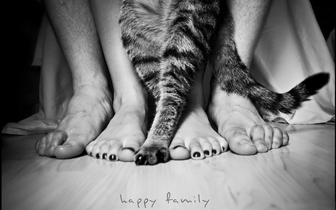 Black and white cats animals feet grayscale pets paws wallpaper