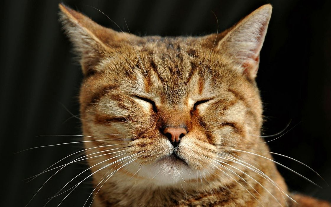Cats animals closed eyes wallpaper