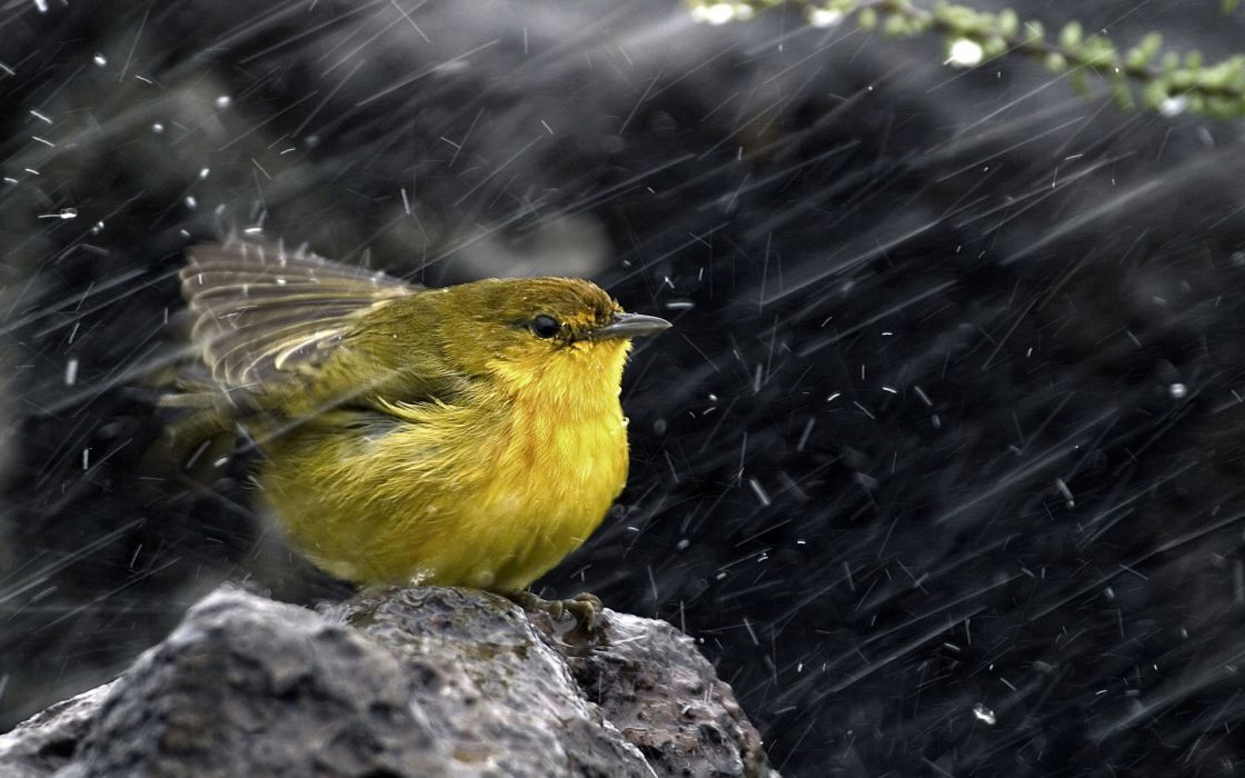Rain birds wallpaper