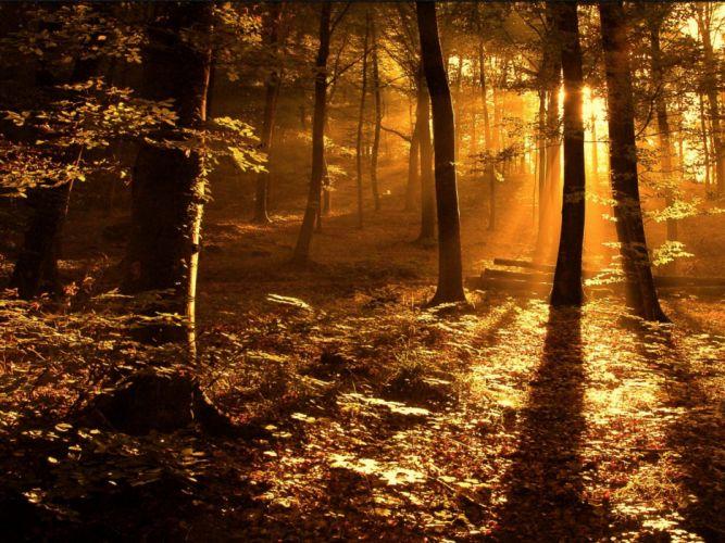 Nature sun woods ray wallpaper