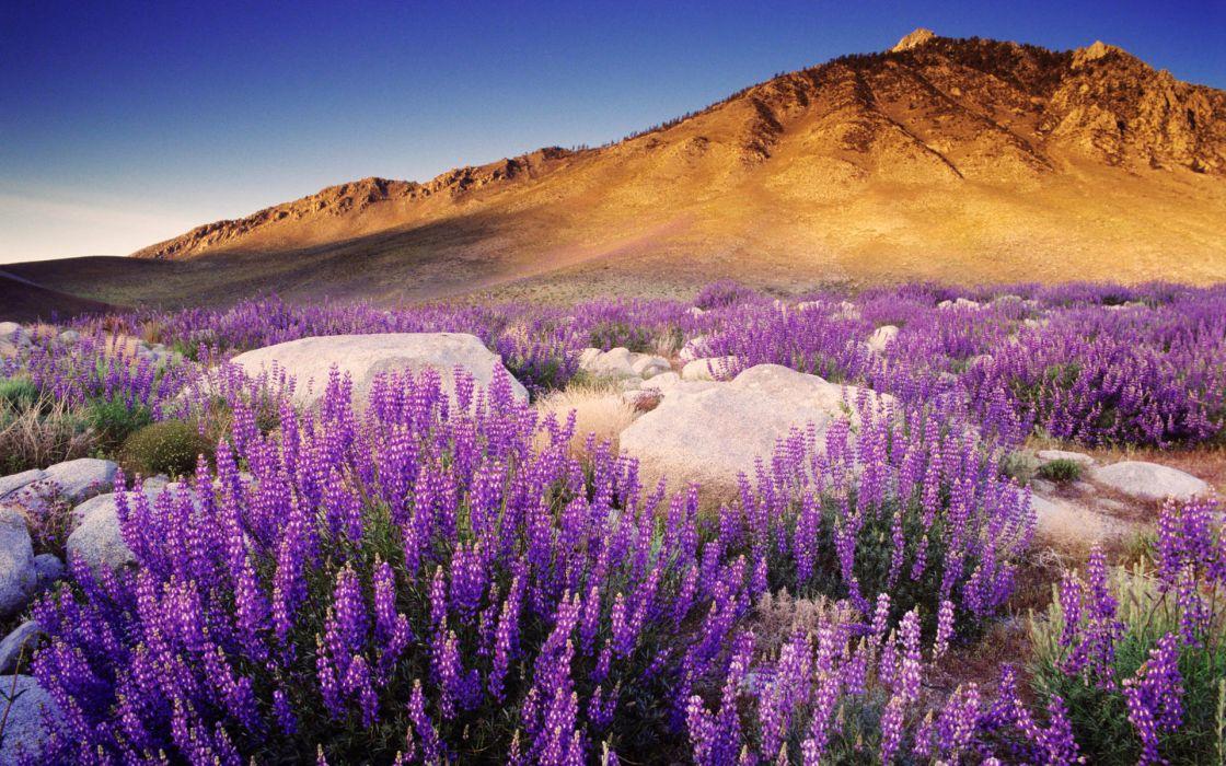 Mountains flowers wallpaper