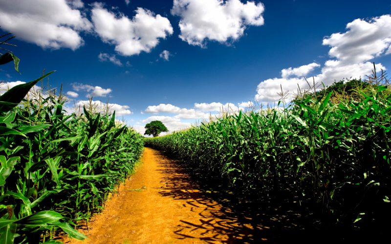 Clouds nature fields corn farms ndspaces wallpaper
