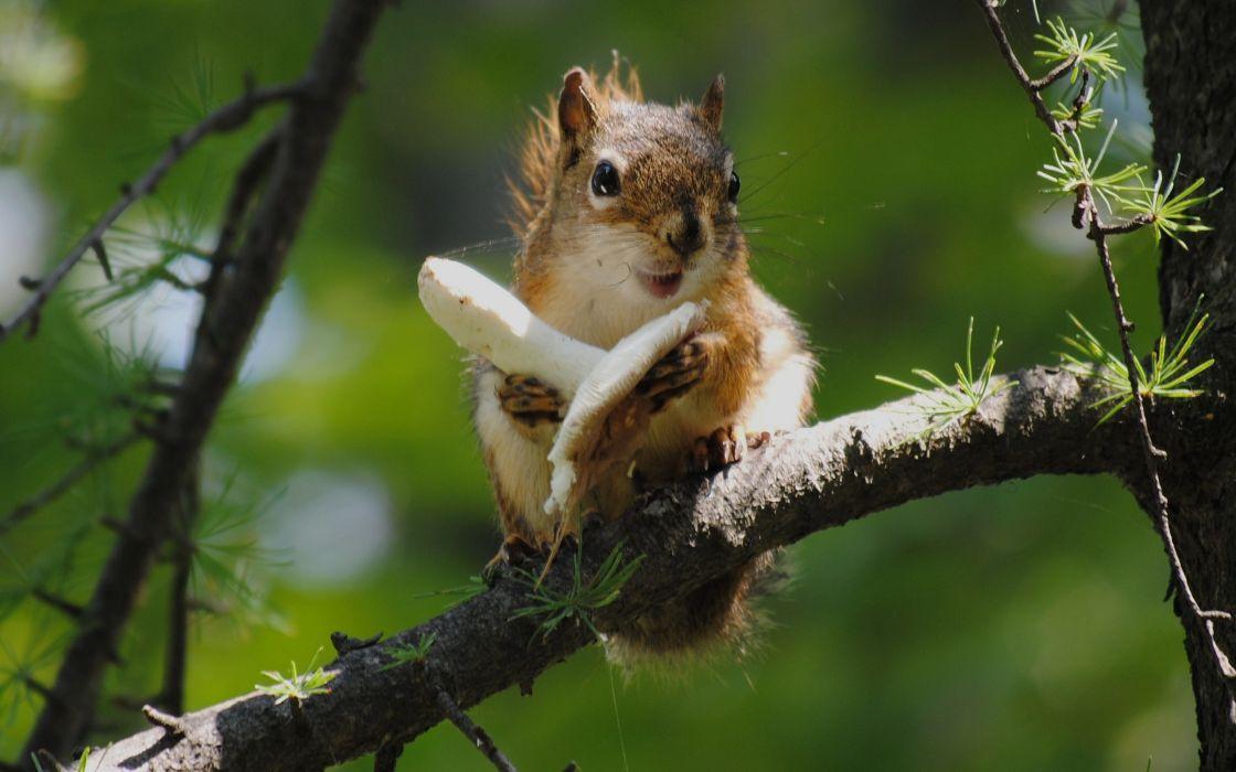 Animals mushrooms squirrels depth of field wallpaper
