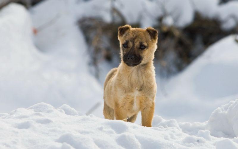 Winter (season) snow animals dogs pets documentary wallpaper