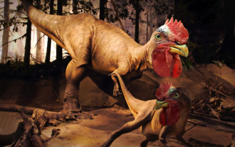 Dinosaurs chickens wallpaper