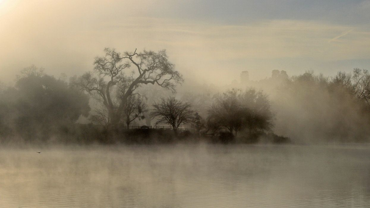Trees fog lakes wallpaper