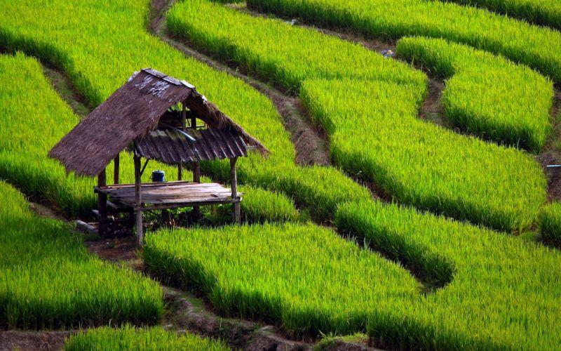 Green nature grass wallpaper
