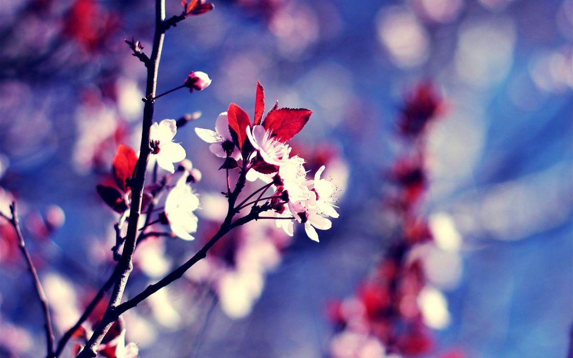 Nature flowers bokeh macro branches pink flowers wallpaper