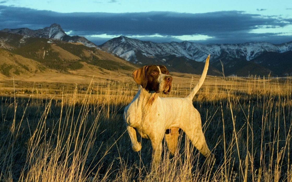 Landscapes nature animals dogs wallpaper