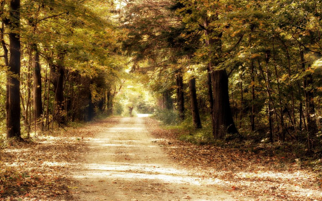 Landscapes trees path wallpaper