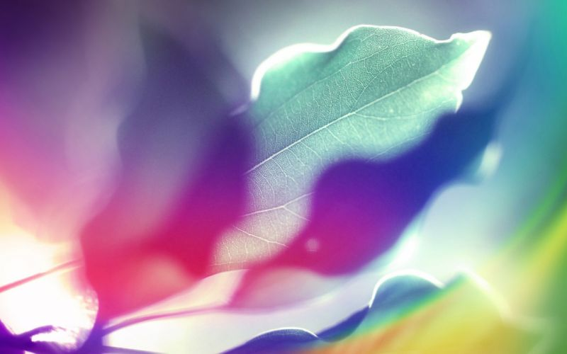 Abstract multicolor leaves design backgrounds wallpaper