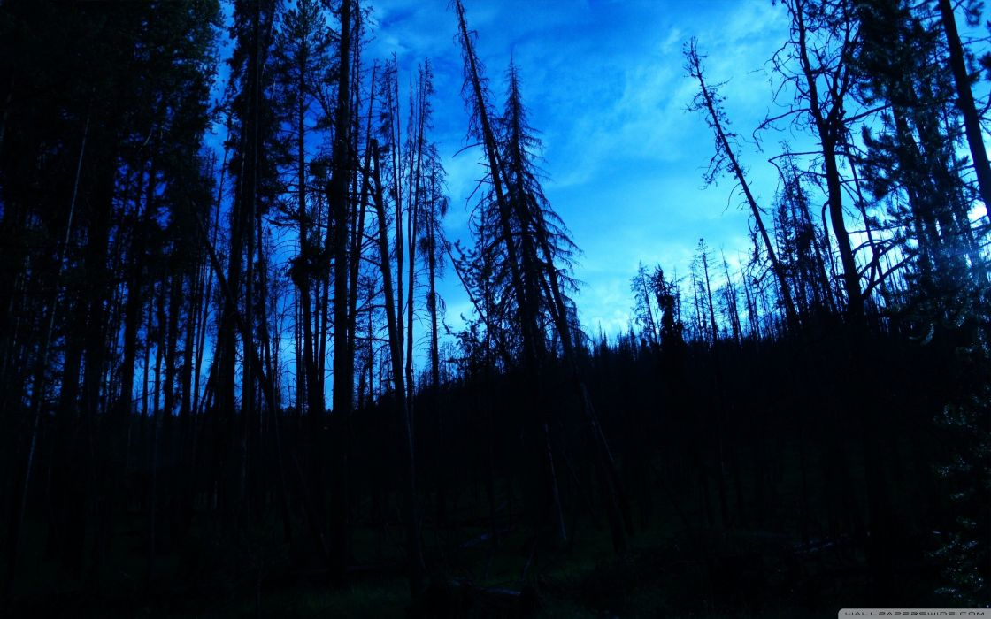 Blue trees dark night forest skyscapes blue skies wallpaper