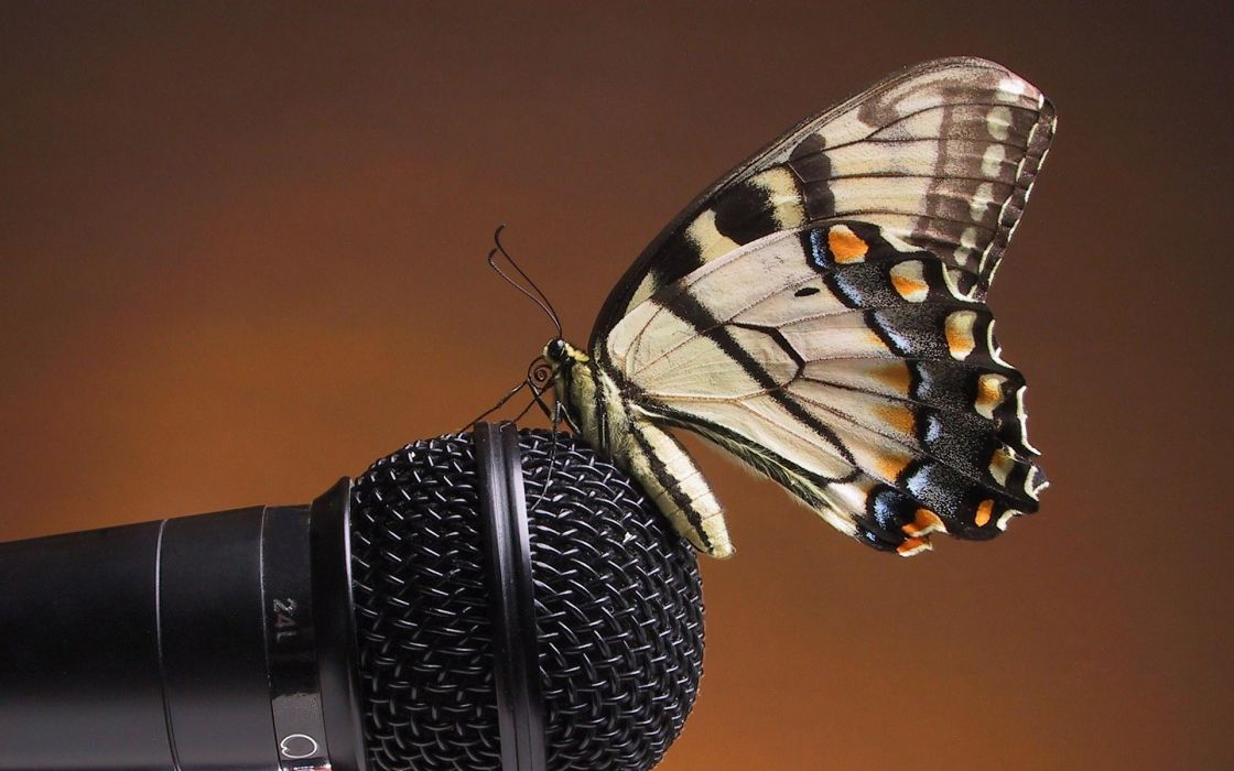 Up butterfly microphones wallpaper