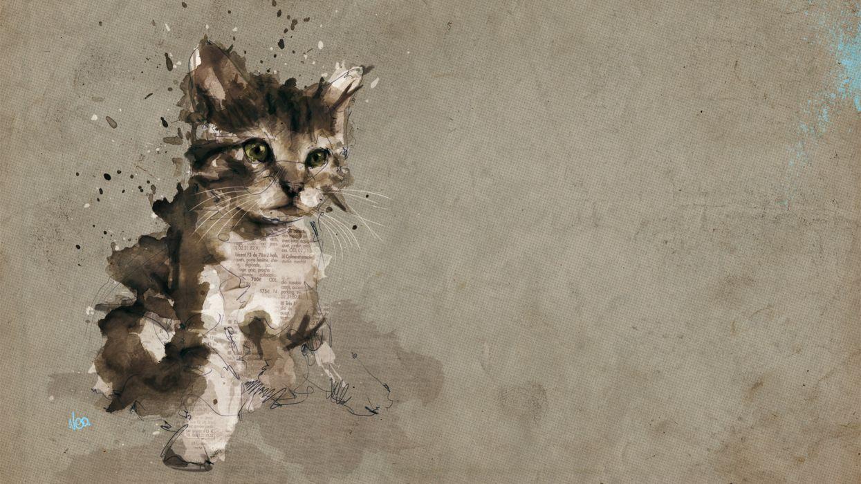 Cats animals gray kittens wallpaper