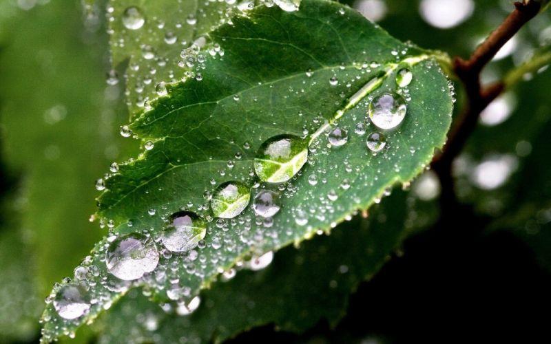 Nature plants water drops macro wallpaper